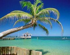 palmtree_a.jpg